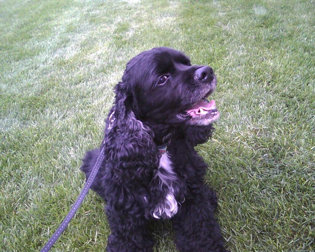 Zachary, James Donio's beloved dog